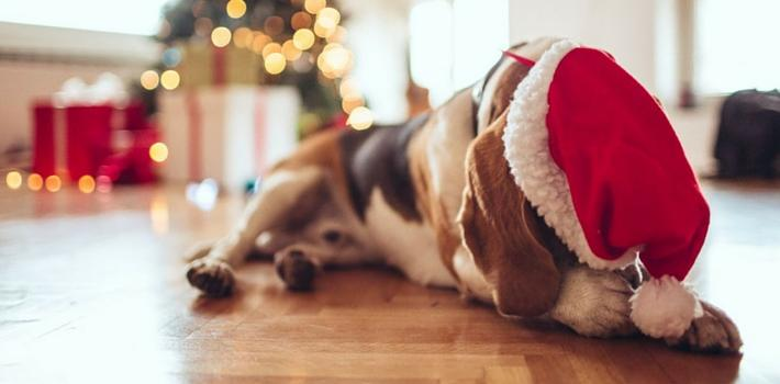 12 tips to keep your pet safe and healthy this Christmas