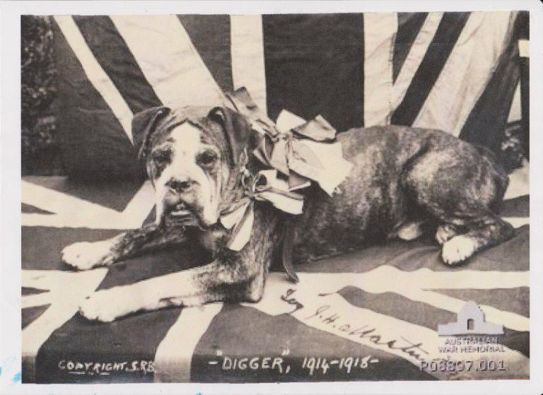 Digger the ANZAC War Dog bravery to be commemorated in 2017
