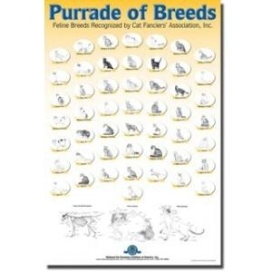 NCG - Breed Poster